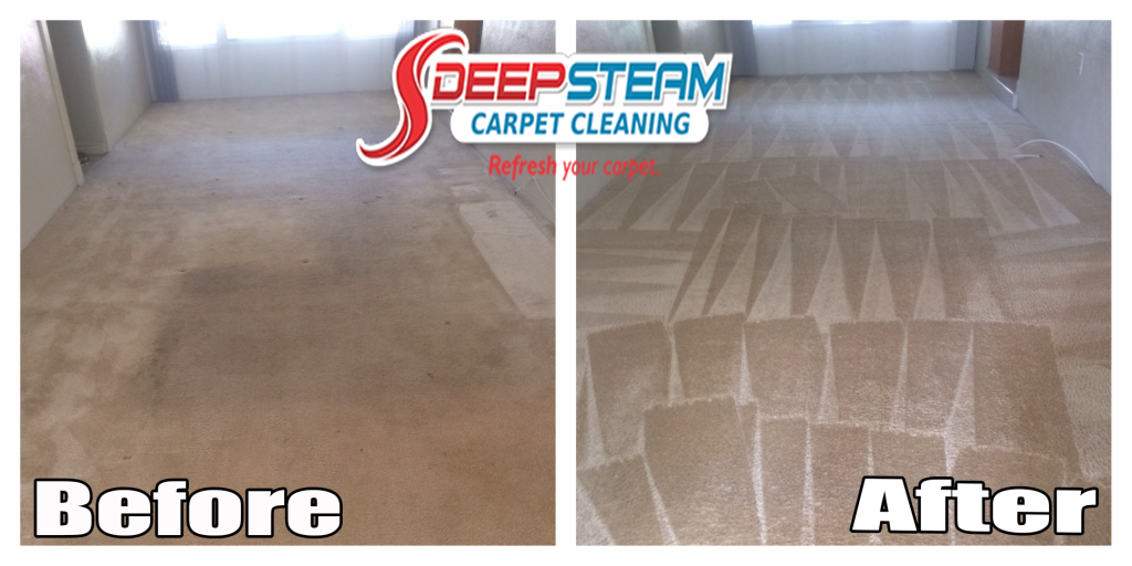Carpet Cleaning Tampa Before After